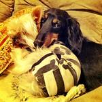 Max & Miu thumbnail
