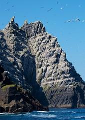 Little Skellig Island (paulgmccabe) Tags: ireland kerry gannet northerngannet skellig littleskellig skelligislands challengefactorywinner