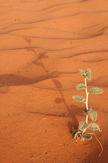 my shadow (SAUD ALRSHIAD 2  ) Tags: shadow sun tree nature lines yellow composition landscape photography sand nikon desert saudi arabia sands riyadh ksa saud saudia d90 yalow riydh    nikond90 flickraward thomama  nikonflickraward 90 alrshiad sauia