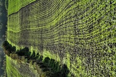 eh? (algo) Tags: england green farm chilterns hedge fields algo furrows ploughing searchthebestnew