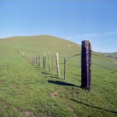 The Grass is Greener (Scott Holcomb) Tags: westmarindairyranches nicasio marin california kowasix kowa13555mmlens kowal393cuvø67filter 120film 6x6 mediumformat epsonperfectionv600 photoshopdigitalization