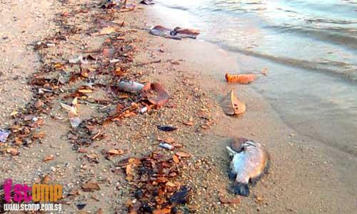 The Lazy Lizard's Tales: So many dead fish washed ashore near The ...