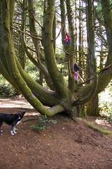 Good climbing tree (zaui) Tags: dog oregon abigail amelia 2009 treeclimbing jacomo harrisbeachstatepark