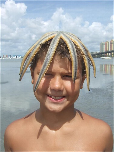 Jagger with starfish head