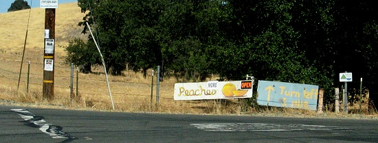On My Drive: More Peaches, please