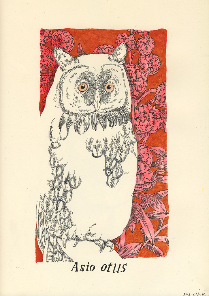 asio-otus (page 1)