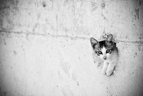 Marmaris. Kačiukas.