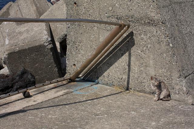 cat 1805