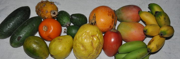 Fruits de Colombie