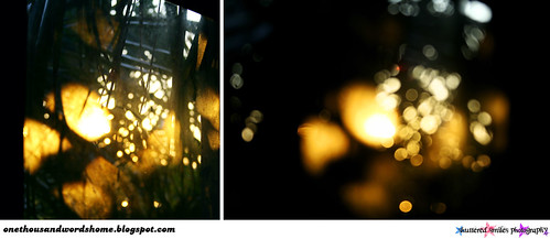 sunshine on my window diptych