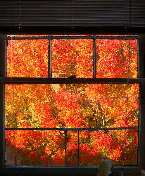DSC_0030_autumn_bedroom_window