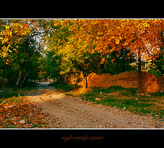 Autumn (seyed mostafa zamani) Tags: autumn light sunset color tree love nature colors beautiful beauty way iran iranian 2009   lovly
