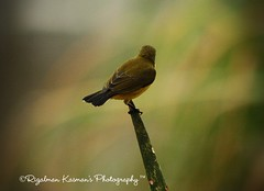 #The Bird Series - Still alone! ( Rizalman Kasman Photography) Tags: bird nature bokeh burung platinumheartaward