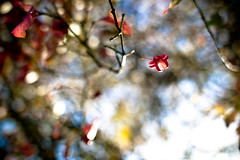 Shapes of Autumn II (Pascal Hertleif) Tags: autumn trees plant macro tree fall closeup forest germany herbst pflanze location nrw makro blatt wald bltter bume baum ort metternich ef28mmf18usm