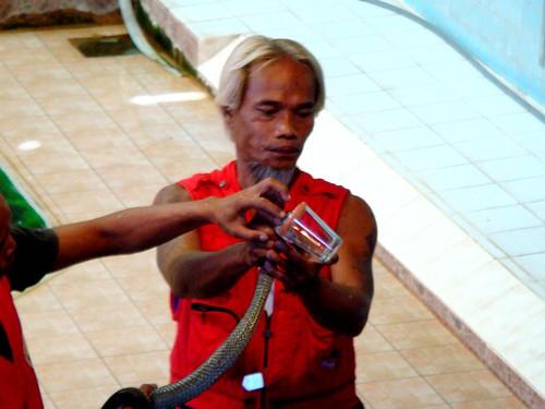 Thailand: Elephant Ride and Snake Show