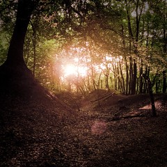 End of Day in the Enchanted Forest (Gilderic Photography) Tags: wood autumn light sunset sun tree green nature leaves forest automne season square lumix soleil europe raw day belgium belgique belgie magic chartreuse ground jour panasonic vision fantasy lumiere flare end fin liege foret arbre crepuscule enchanted contrejour bois feuille lightroom saison 500x500 lx3 enchantee dmclx3 oblats grivegnee bestcapturesaoi