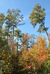 some trees (The Noble's42) Tags: fall tress socar