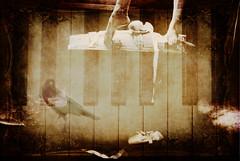 To the Left (yogitiad..but actually just Jenn) Tags: ballet newyork bird texture ribbons shoes piano dancer trunk layer steamer blackbird pianokeys fujifinepix balletshoes gloversville pareerica graphicmaster birdwatchingthedaner standingprecariouslyonatrunk