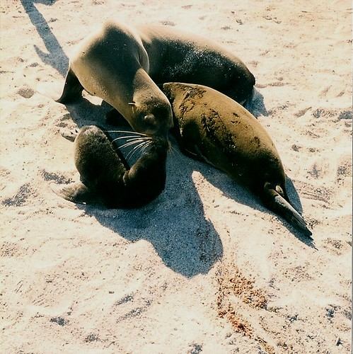 Galapagos-Seymour Nord (10)
