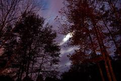 twilight wispy clouds (Judy Rushing) Tags: trees twilight wispyclouds nikond200 herowinner ultraherowinner pregamewinner npgm