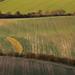 Patterned fields