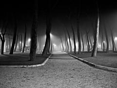Canap into the fog (G) Tags: trees light parco white black grass fog lights italia noir centro bn nebbia foligno canap