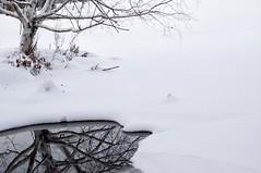 I Believe (~EvidencE~) Tags: winter lake snow ontario cold reflection tree ice nature nikon evidence peterborough pondering ibelieve beautifu visionqualitygroup listeningtorightnow riversidefromwarsawpoland 1ofmyfavbands