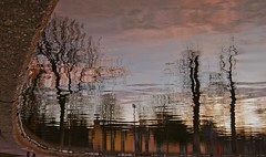 Visions of Johanna (brendan ) Tags: trees lake cold tree stone reflections arbole lago visions agua december arboles please cork lakes lagos reflect pato bobdylan stonewall serene aguas brendan frio countycork corcaigh entwined patos reflects corkcity nunca  visionsofjohanna corkireland thelough deciembre rebelcounty corkcityireland livelearnlove rebelsab brendan