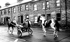 all the pretty little horses (Brenda Malloy) Tags: road street ireland horses dublin brick boys nikon paint ponies piebald brenda buggy trap malloy oxmantown diogenes24