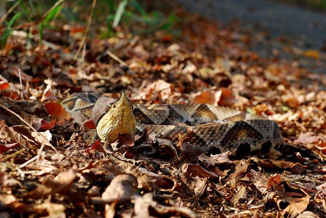 百步蛇2009-54