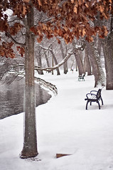 Autumn Bronze on Winter White (pixelmama) Tags: park autumn winter snow leaves textures foxriver parkbench 2009 gettyimages islandpark genevaillinois crazyjogger