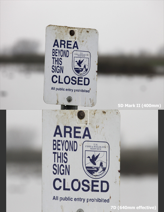 Field Test Canon 7D vs. 5D Mark II