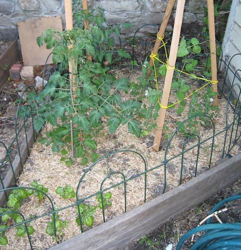 Garden - right