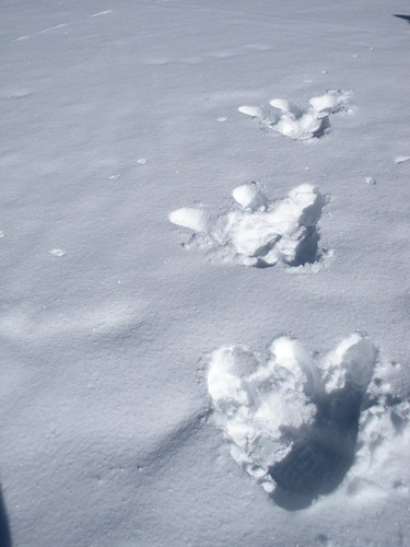 I told the boys to be on the lookout for interesting tracks in the snow and