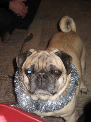 norman does not like his tinsel necklace
