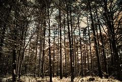 (Chris McLoughlin) Tags: uk england nature day sony yorkshire a300 sonya300 sonyalpha300 alpha300 chrismcloughlin
