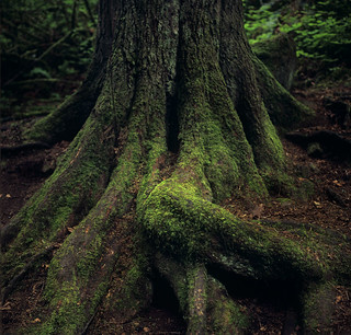 A tree, in repose
