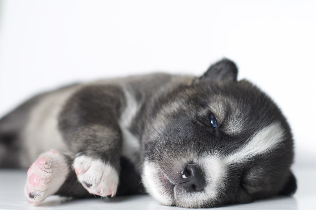 The World S Best Photos Of 3 And Husky Flickr Hive Mind