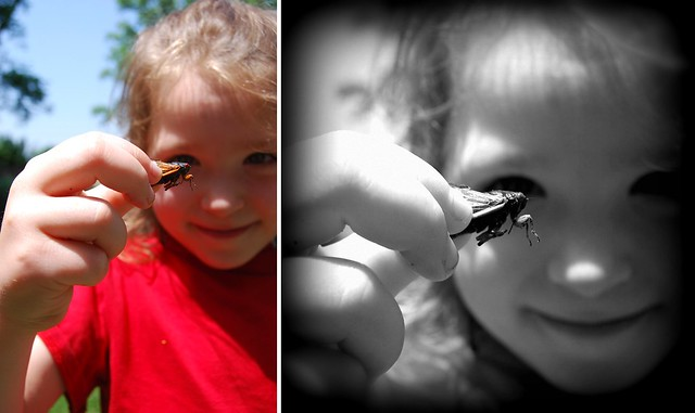 Cicada Tamer