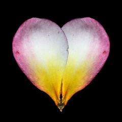 Heart (LSydney) Tags: macro heart macromondays frangipani petal flower