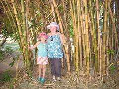 Hiding in the bamboo