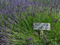 Please... (1bluecanoe) Tags: sign lavender sequim wa daytrippin 1bluecanoe