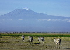 Zebras and Kilimandjaro - Kenya (Eric Lafforgue) Tags: africa kilimanjaro kenya culture tribal zebra tribes afrika tradition tribe ethnic tribo afrique ethnology tribu eastafrica zebre kilimandjaro zebres qunia 7759 lafforgue ethnie  qunia    kea    a