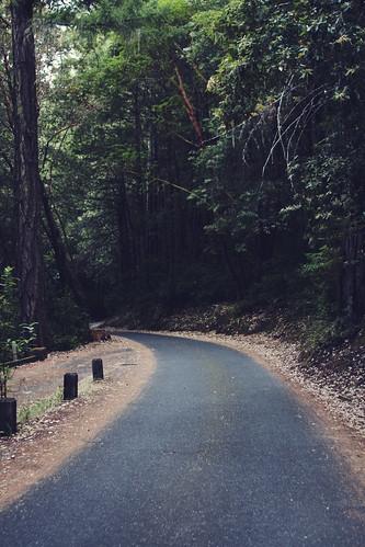 Pathway [215/365]