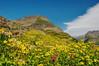 Logan Pass Wildflowers 2