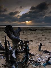 Driftwood in Merang (DSC7914)
