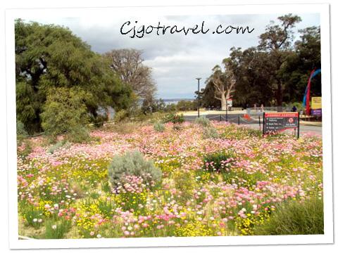 Kings Park, Perth