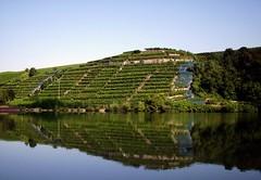 Weinberg (dmytrok) Tags: reflection river germany landscape deutschland am fluss neckar weinberg wineyards heilbronn badenwrttemberg lauffen entspiegelung