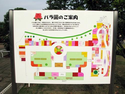 伊奈町 記念公園 バラ園