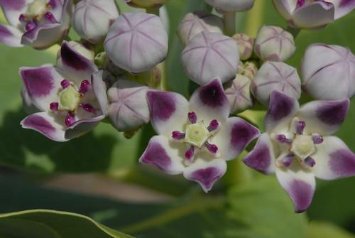 Bien connu A mes fleurs en Islam - Fleurs de Coton TG58